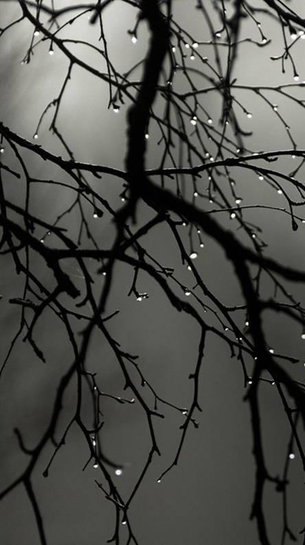 Autumn Rain Drops