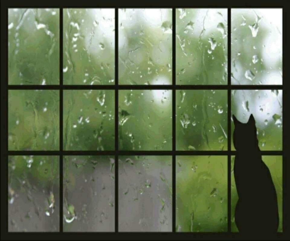Гифки дождь идет, надписью люблю