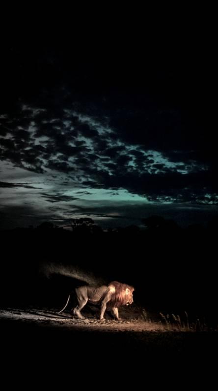 Lion Darkness