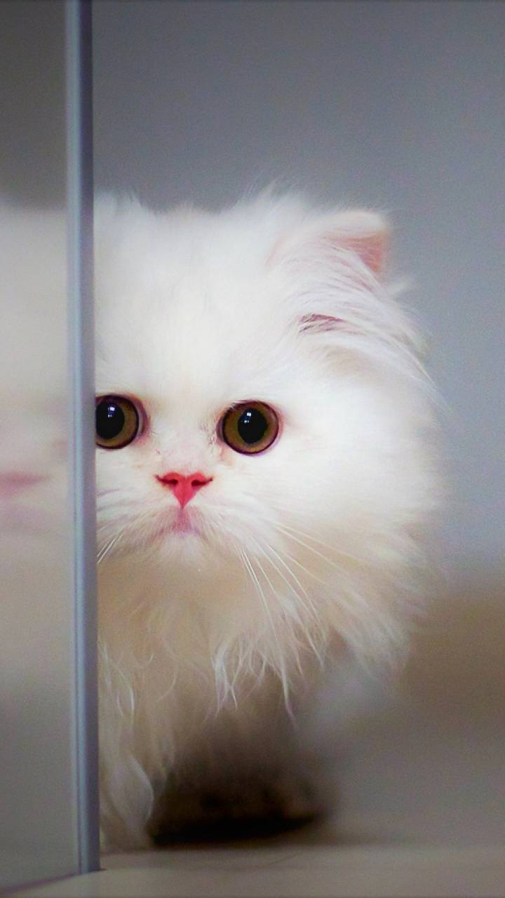 Cute Cat Wallpaper By Pramucc 82 Free On Zedge