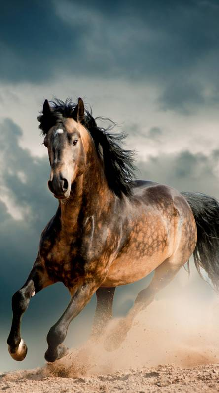 Wild horse Wallpapers - Free by ZEDGE™
