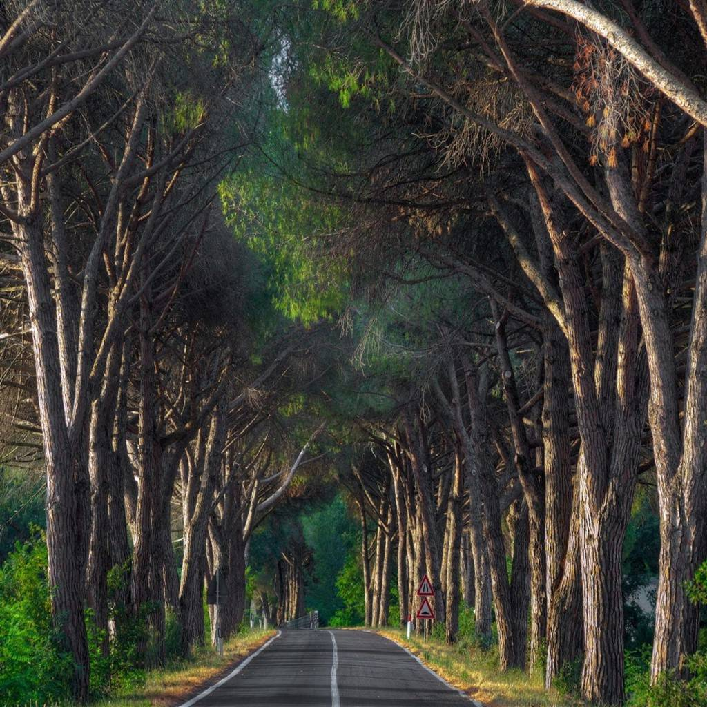Trees along the road