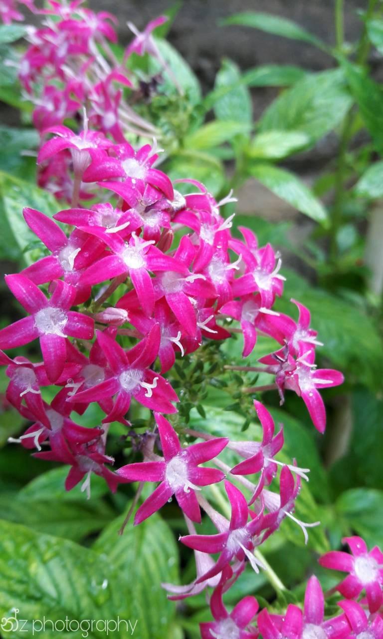Naturel flowers