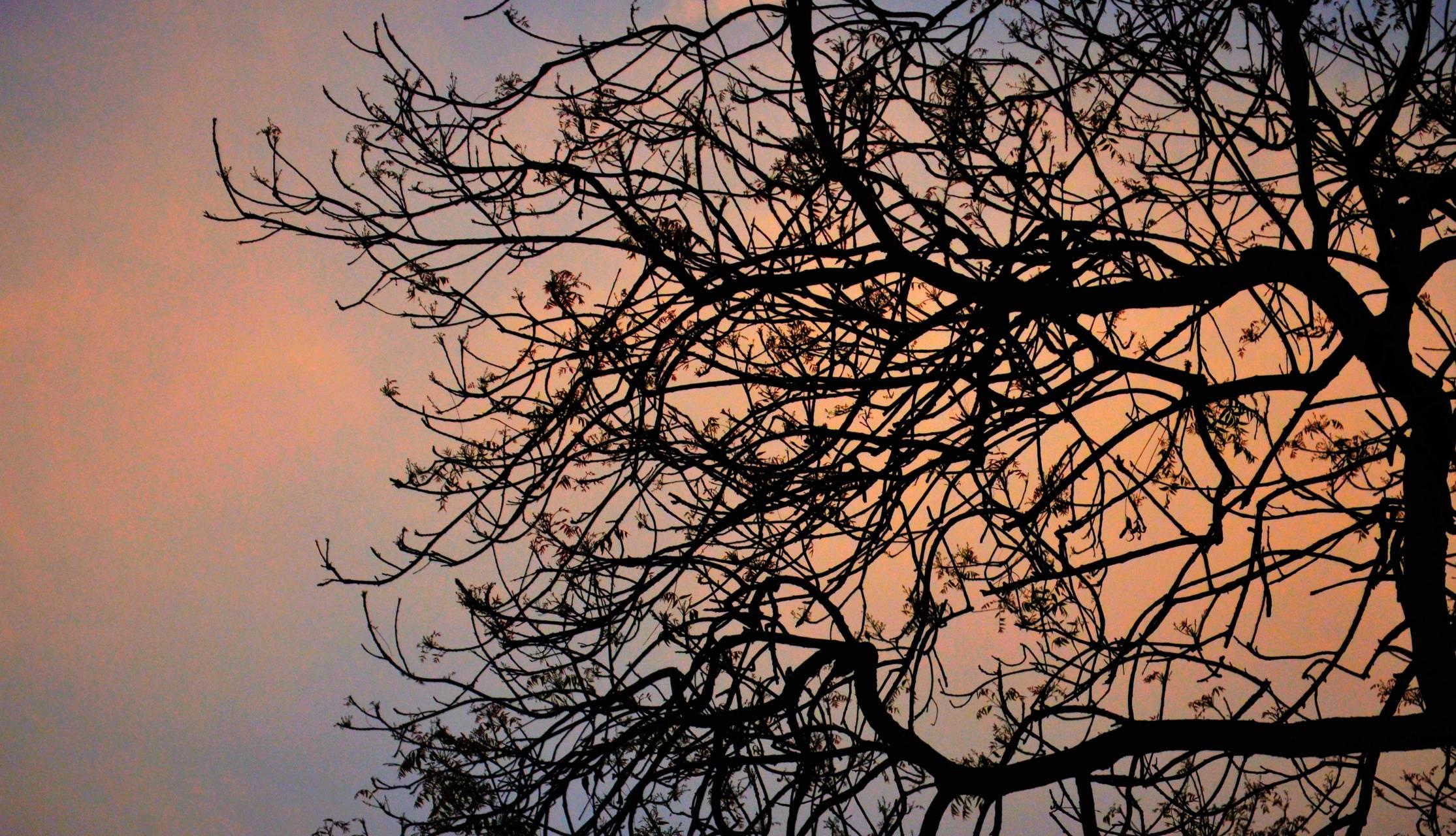 Tree build
