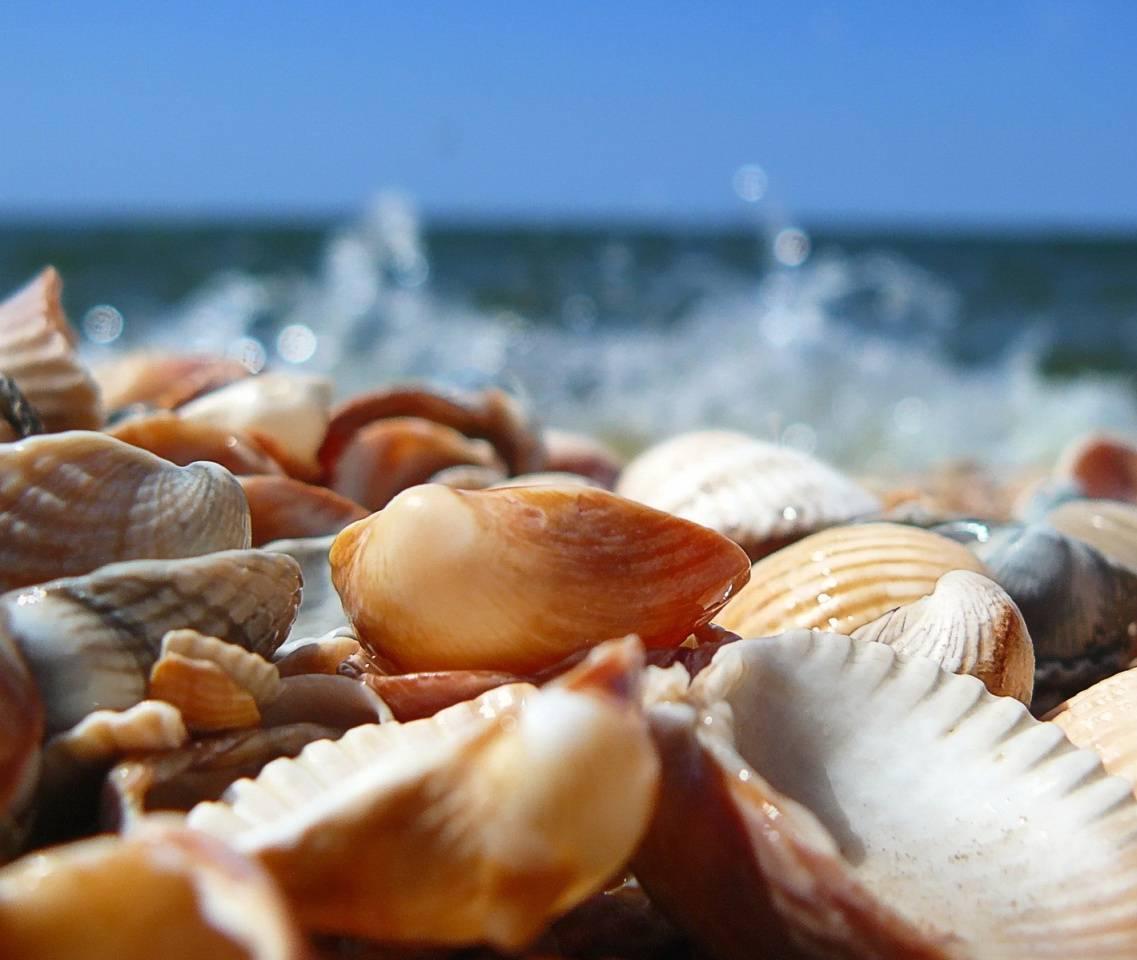 Hd Sea Shells