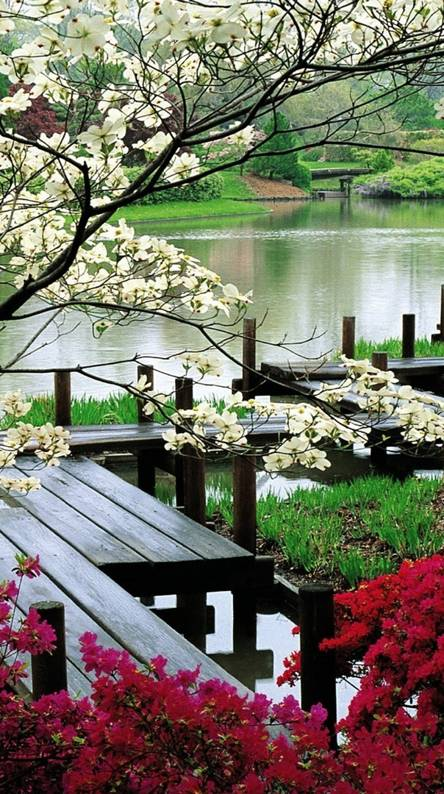 Japanese Garden Wallpapers Free By Zedge