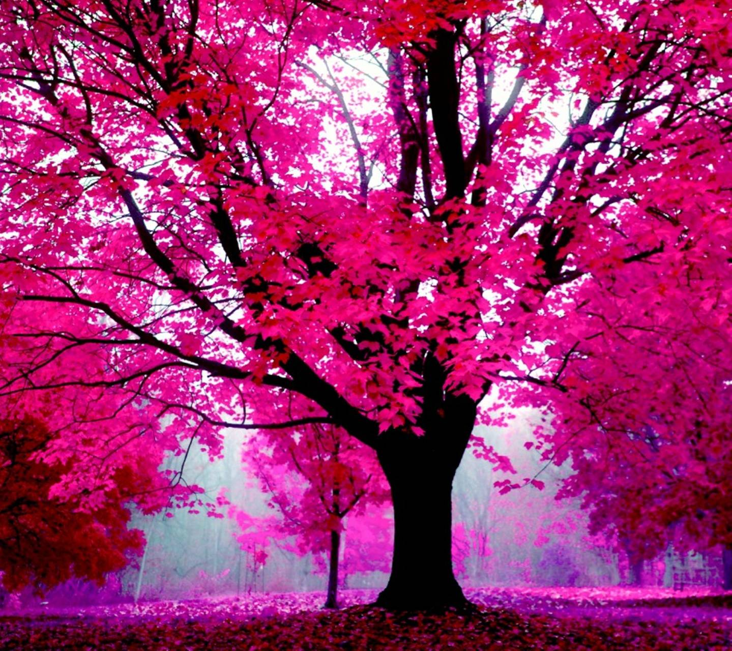 Nature in Pink