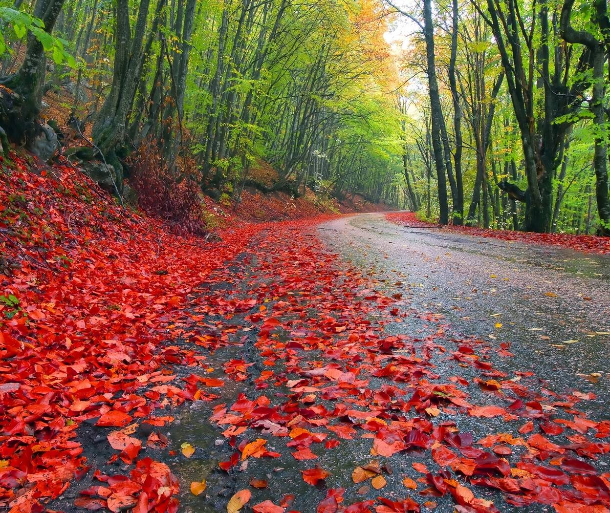 Autumn Road Hd