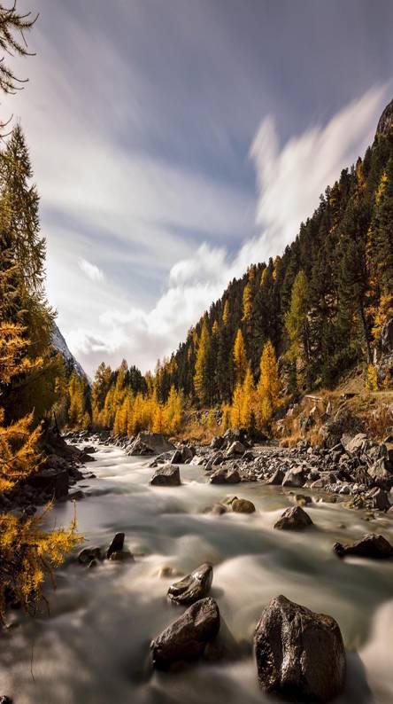 Autumn River trees