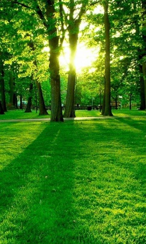 green morning park