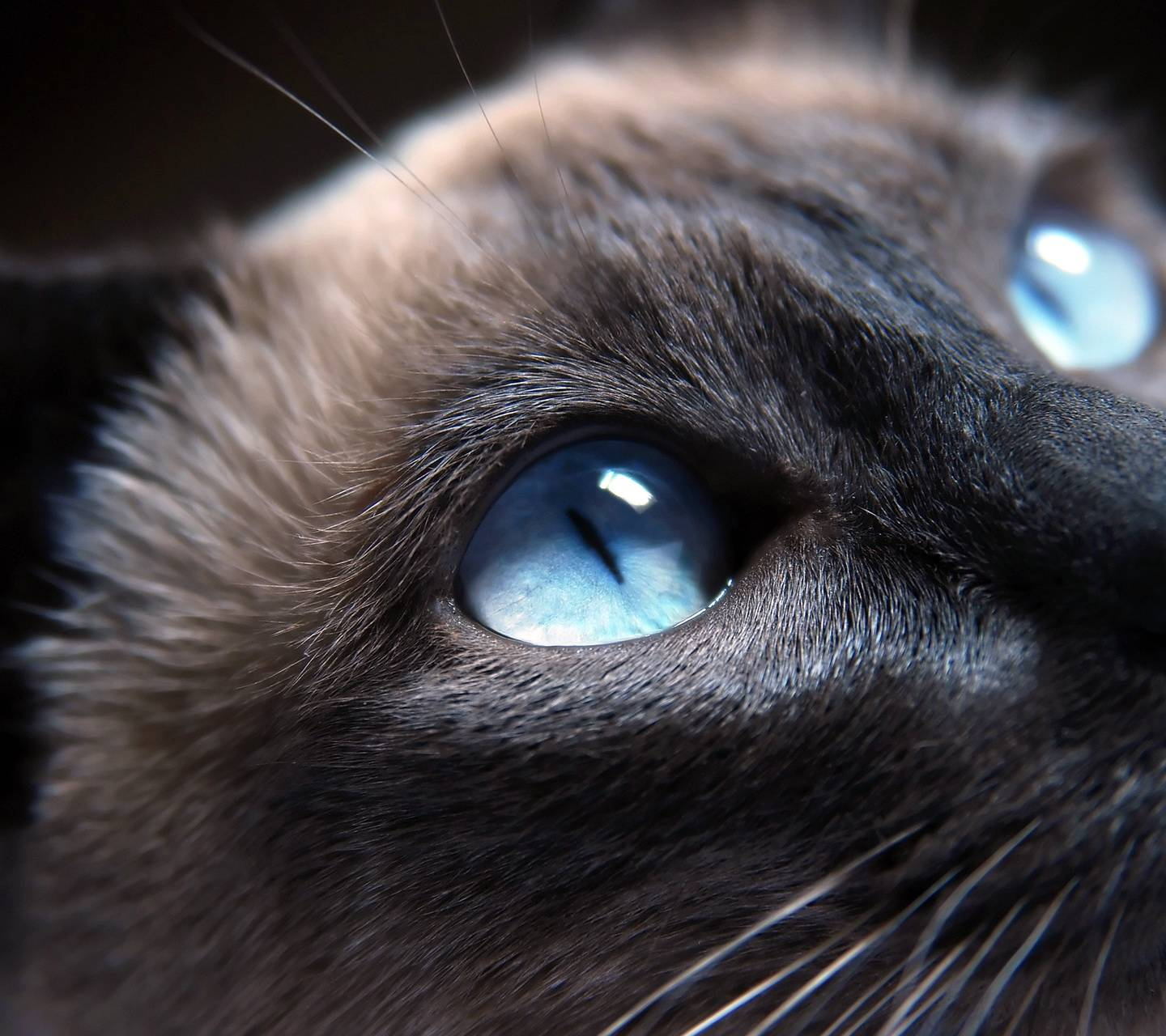 Black Cat Blue Eyes Wallpaper By Atifsaad 03 Free On Zedge
