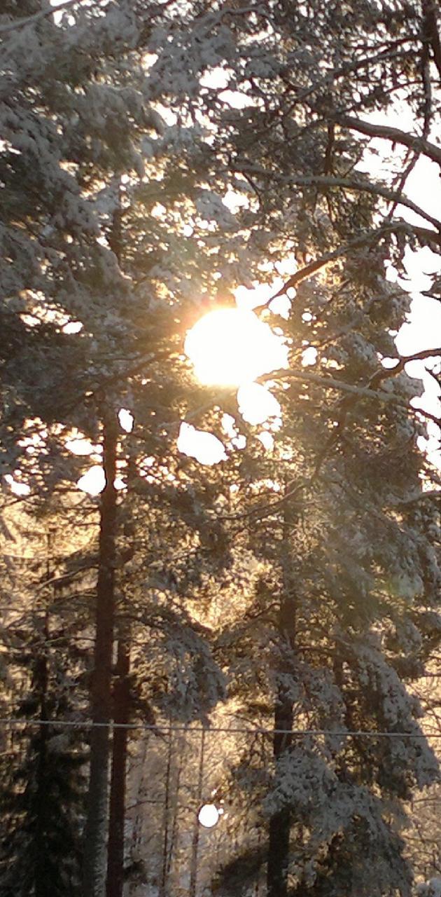 Winter Scene 16