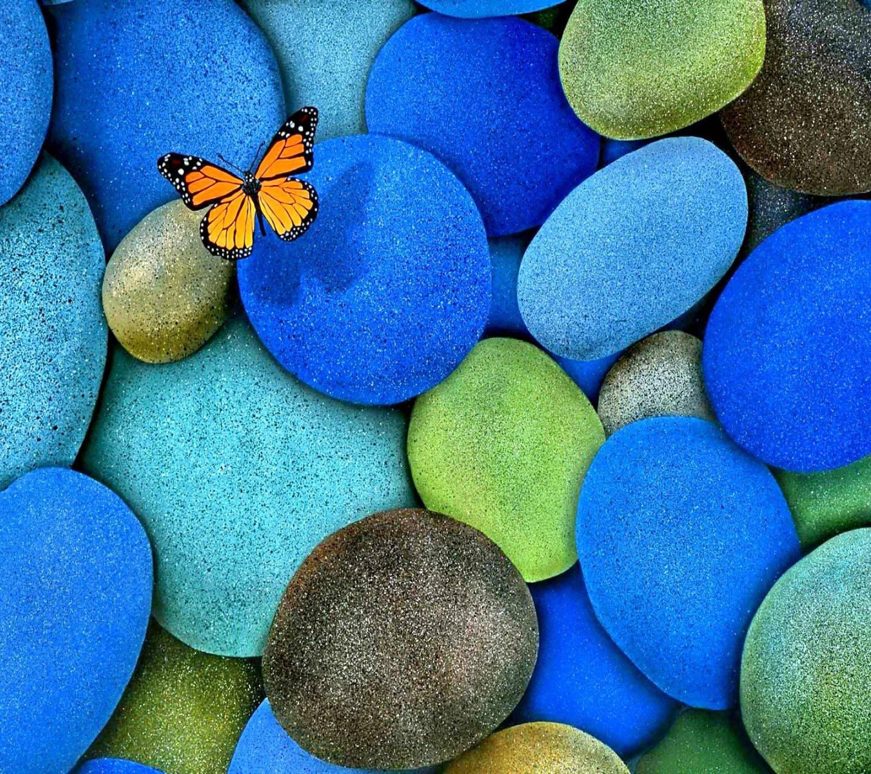 Butterfly in Rocks