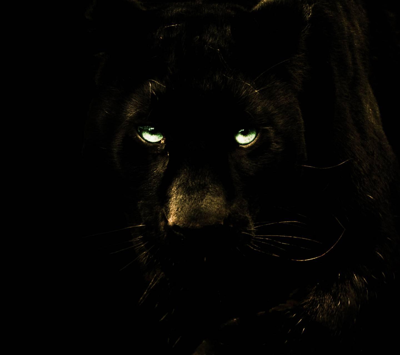 Black Panther Puma