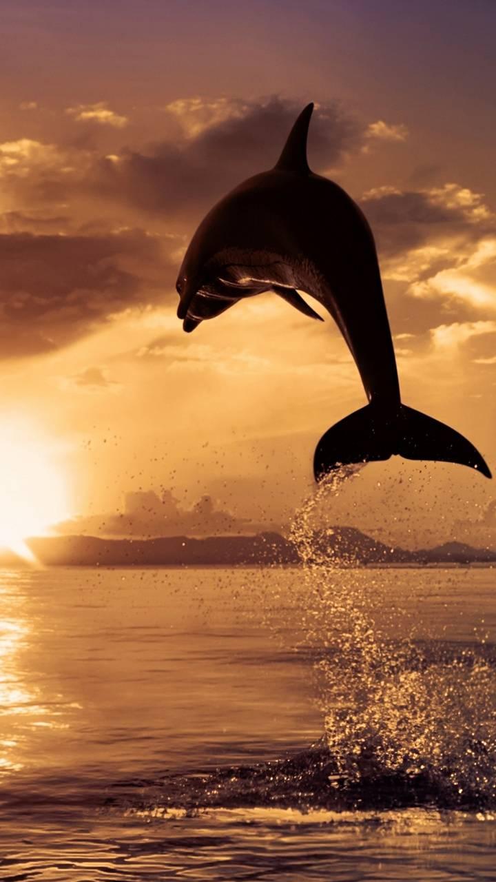 dolphine jump