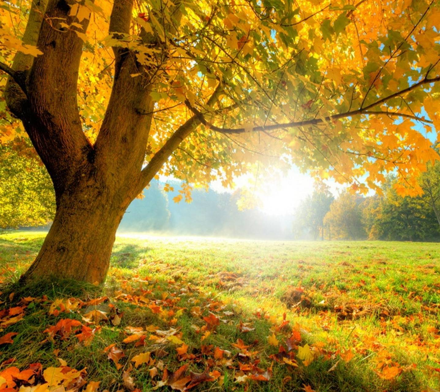 Autumn Equinox Wallpaper By Shrubel1 Eb Free On Zedge