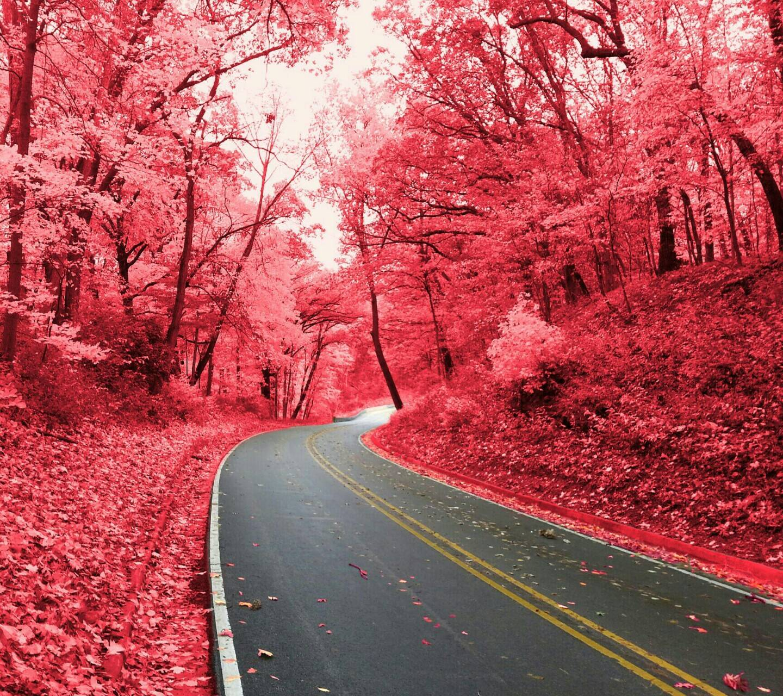 Starved Rock Pink