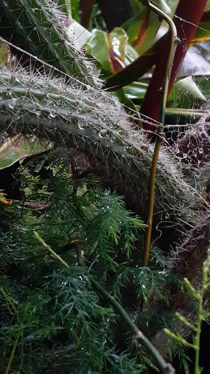 Nature cactus