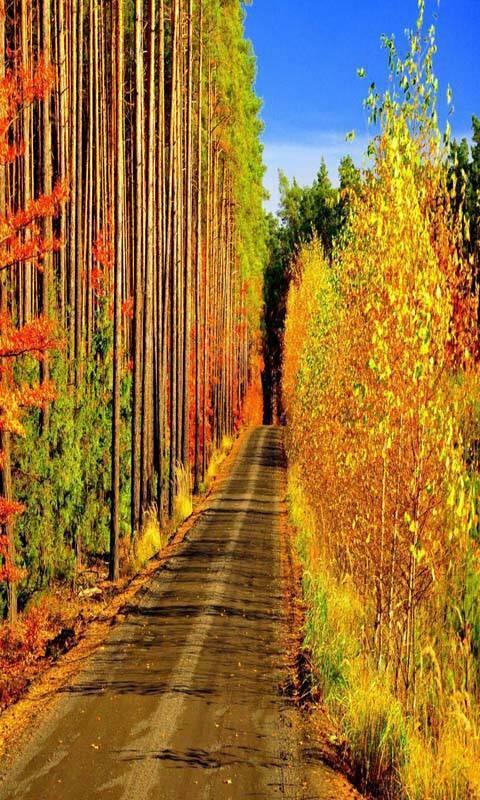 Beautiful Way