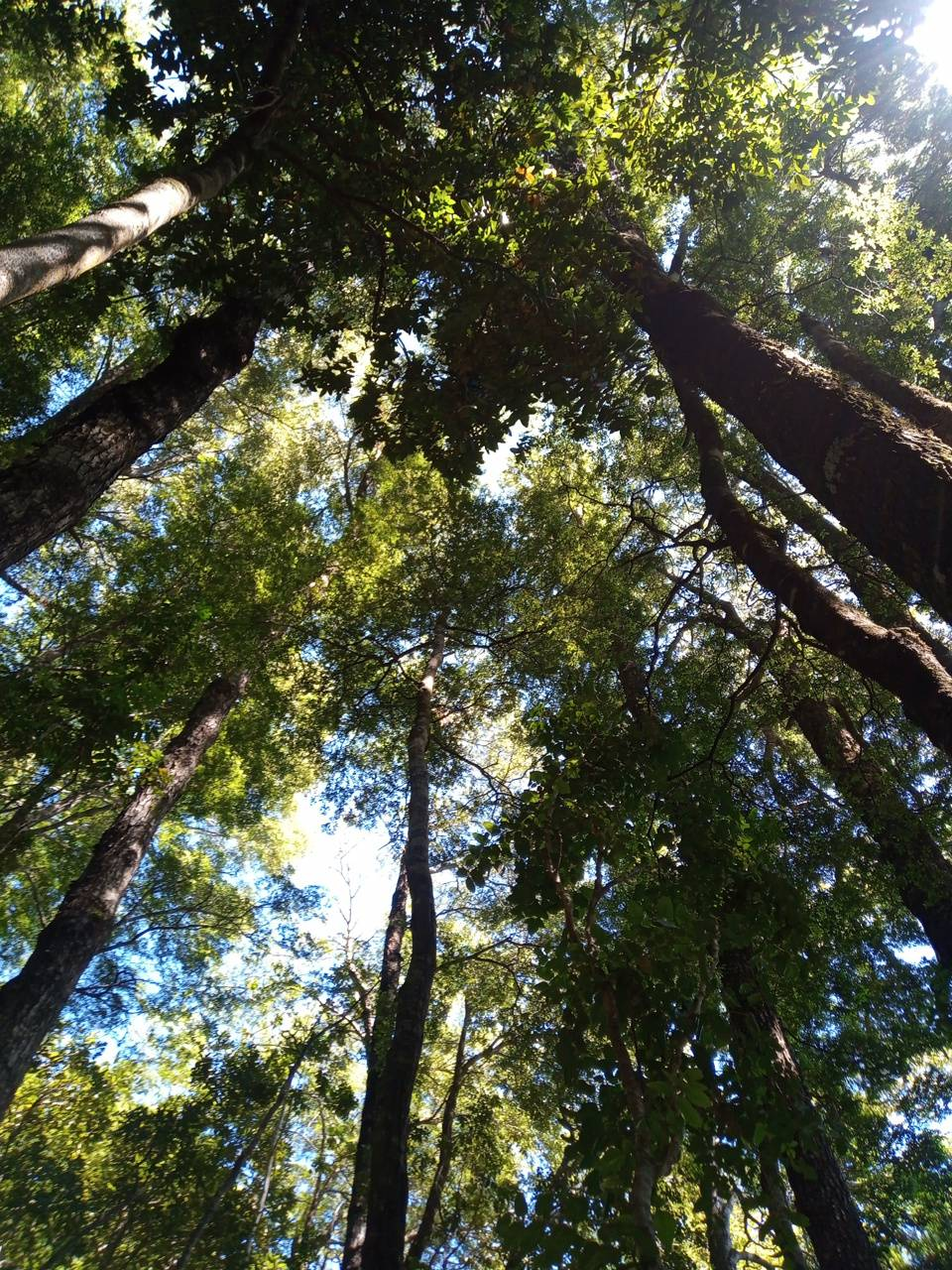 Trees loking the sky