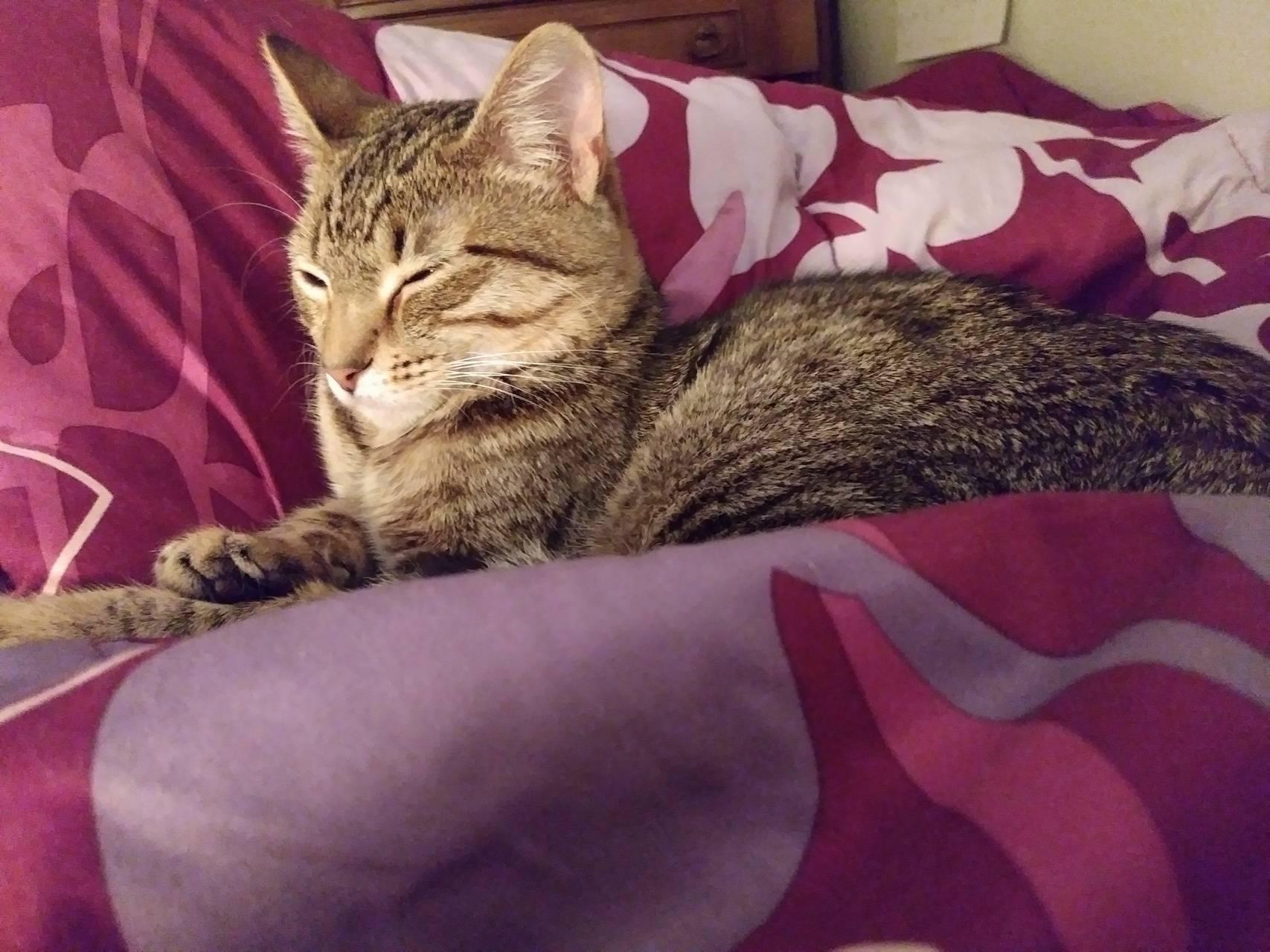 Sunglo cat