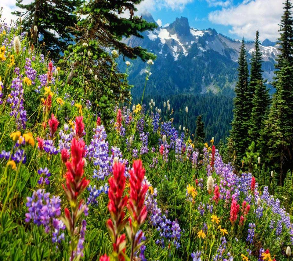 Flowers in Mountain