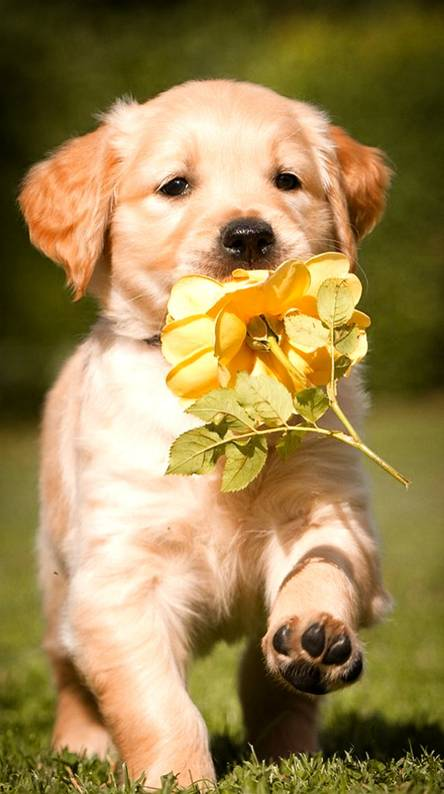 Puppy Wallpapers - Free by ZEDGE™
