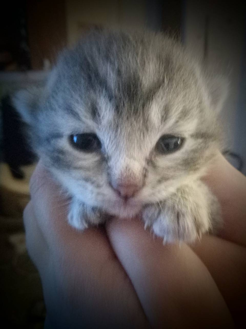 Little kitten