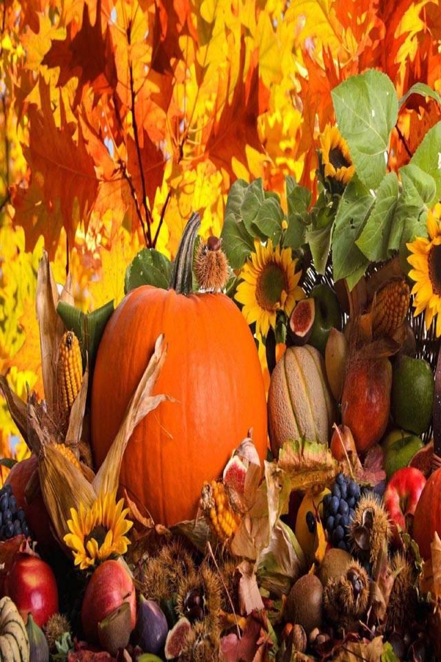 Fruits N Flowers