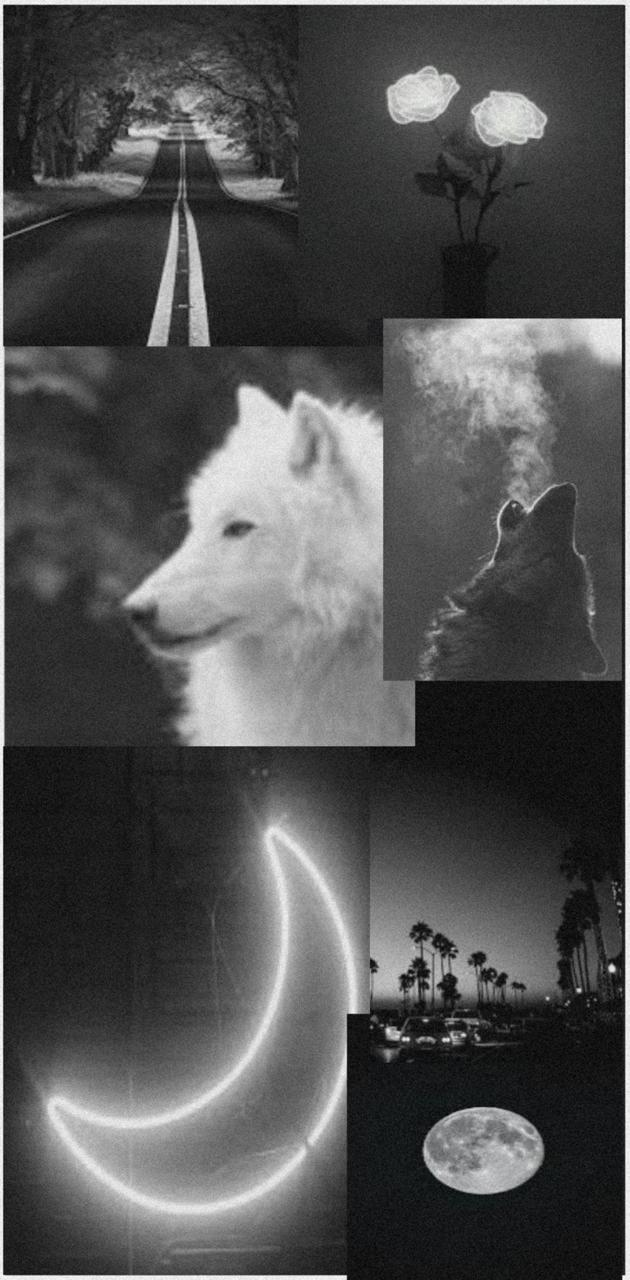 Wolf Aesthetic