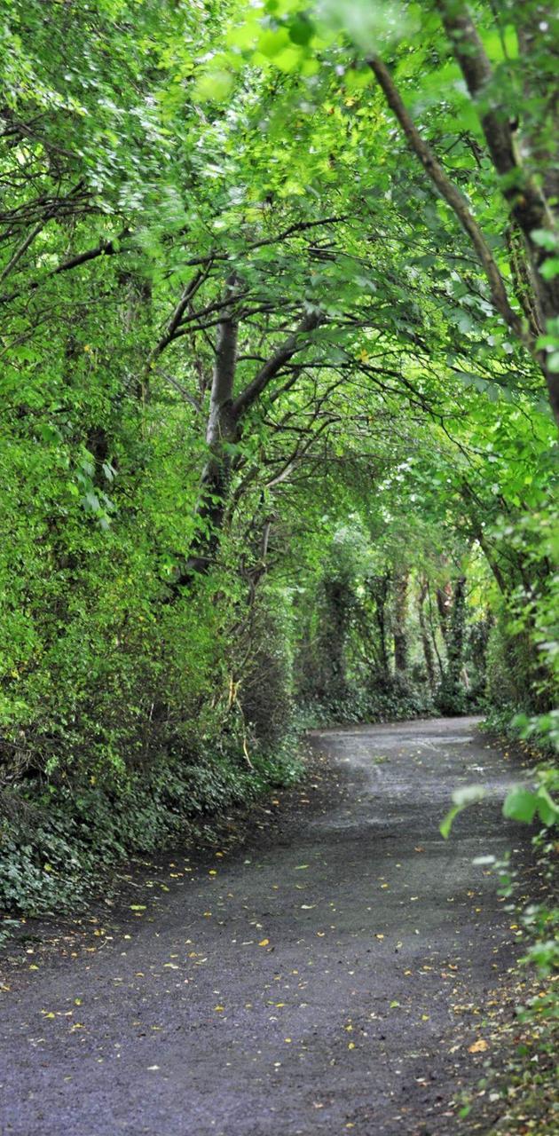 Ireland Trees