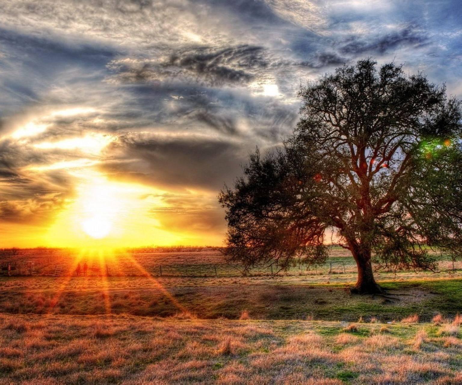 Sunsit Tree