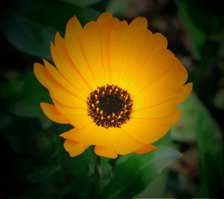 Colorfull Flower HD