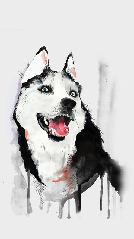 Husky Wallpapers Free By Zedge