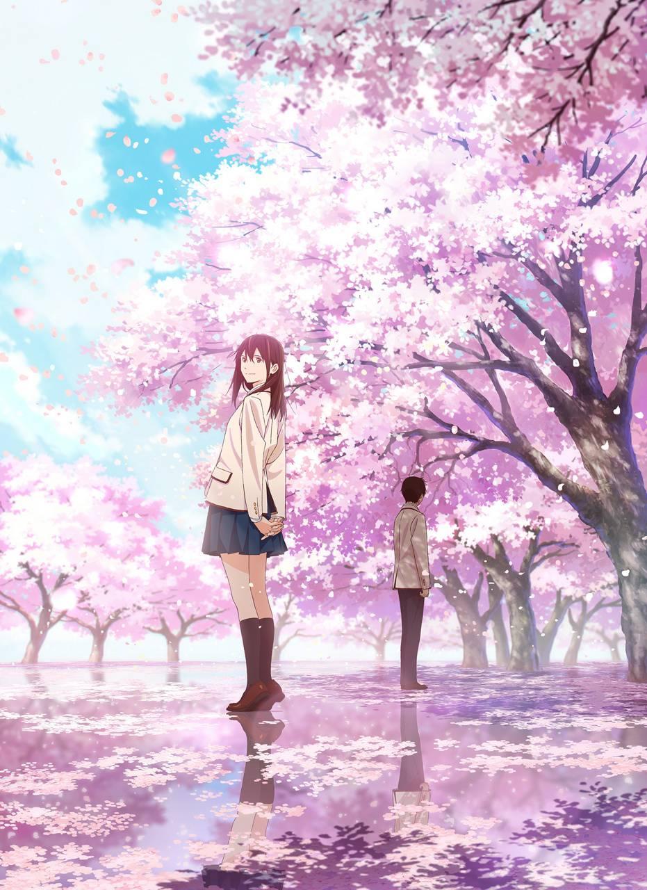 Sakura Yamauchi