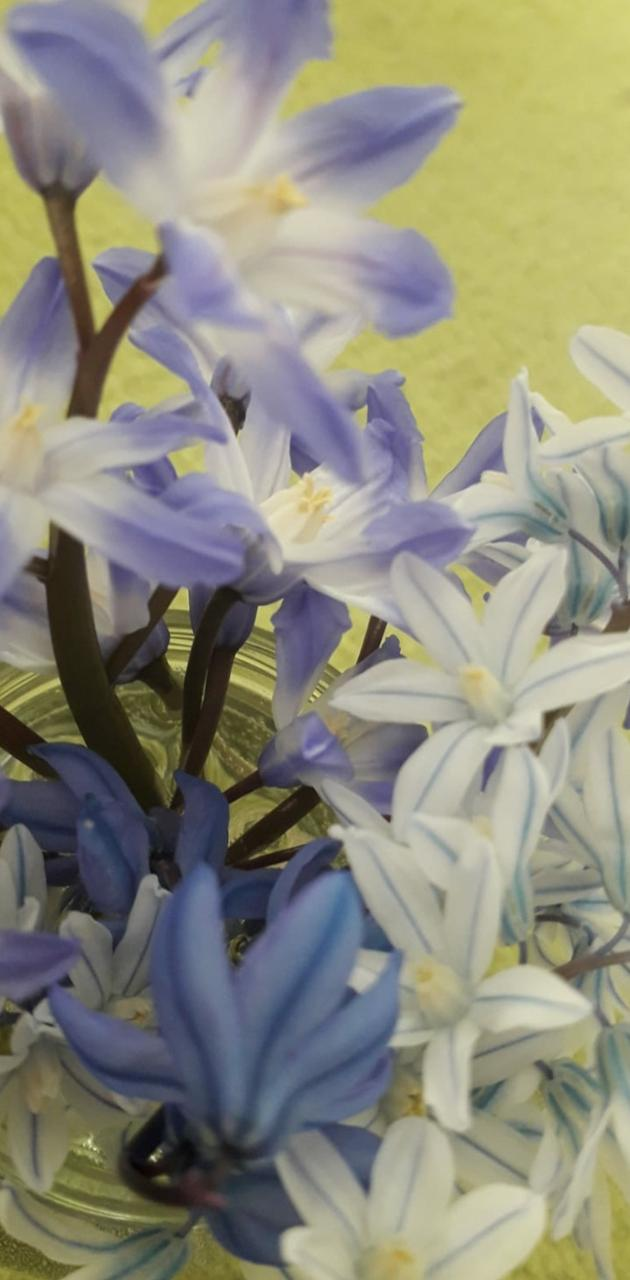 Blue and white flowe