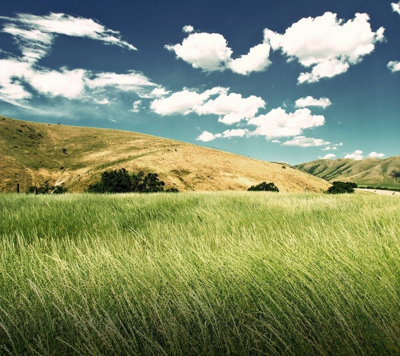 Grasses-mountains