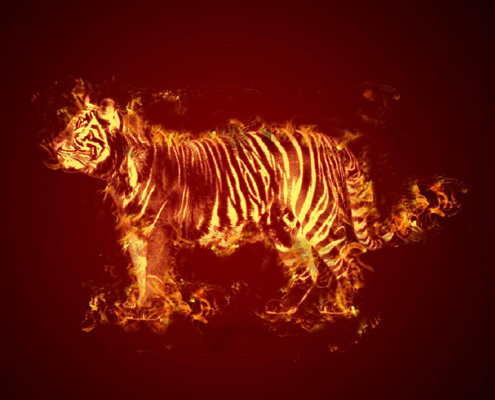 Картинки с огненными тиграми