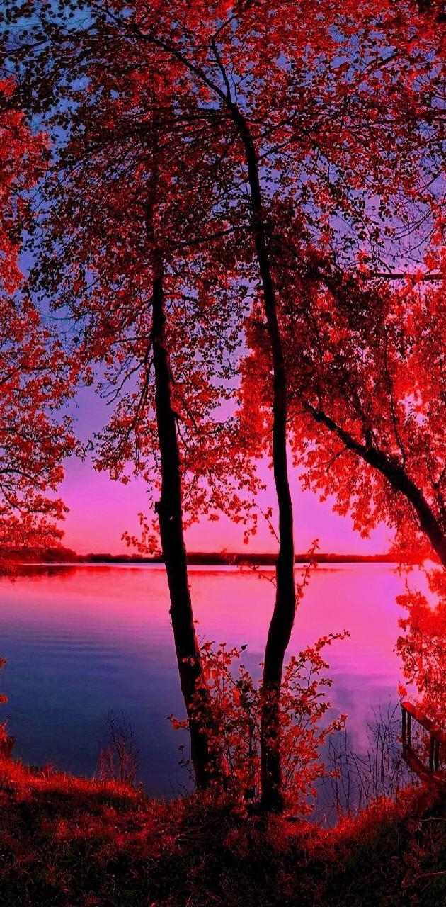 pink------------