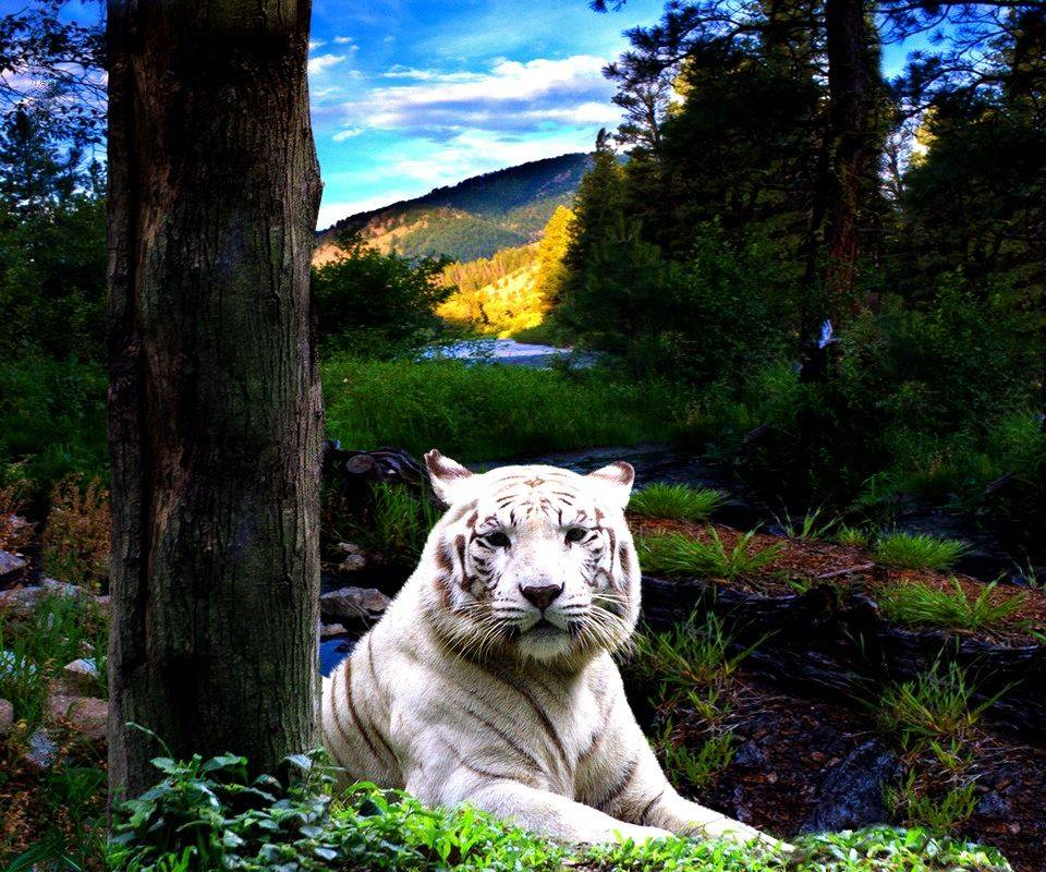 White tiger forest