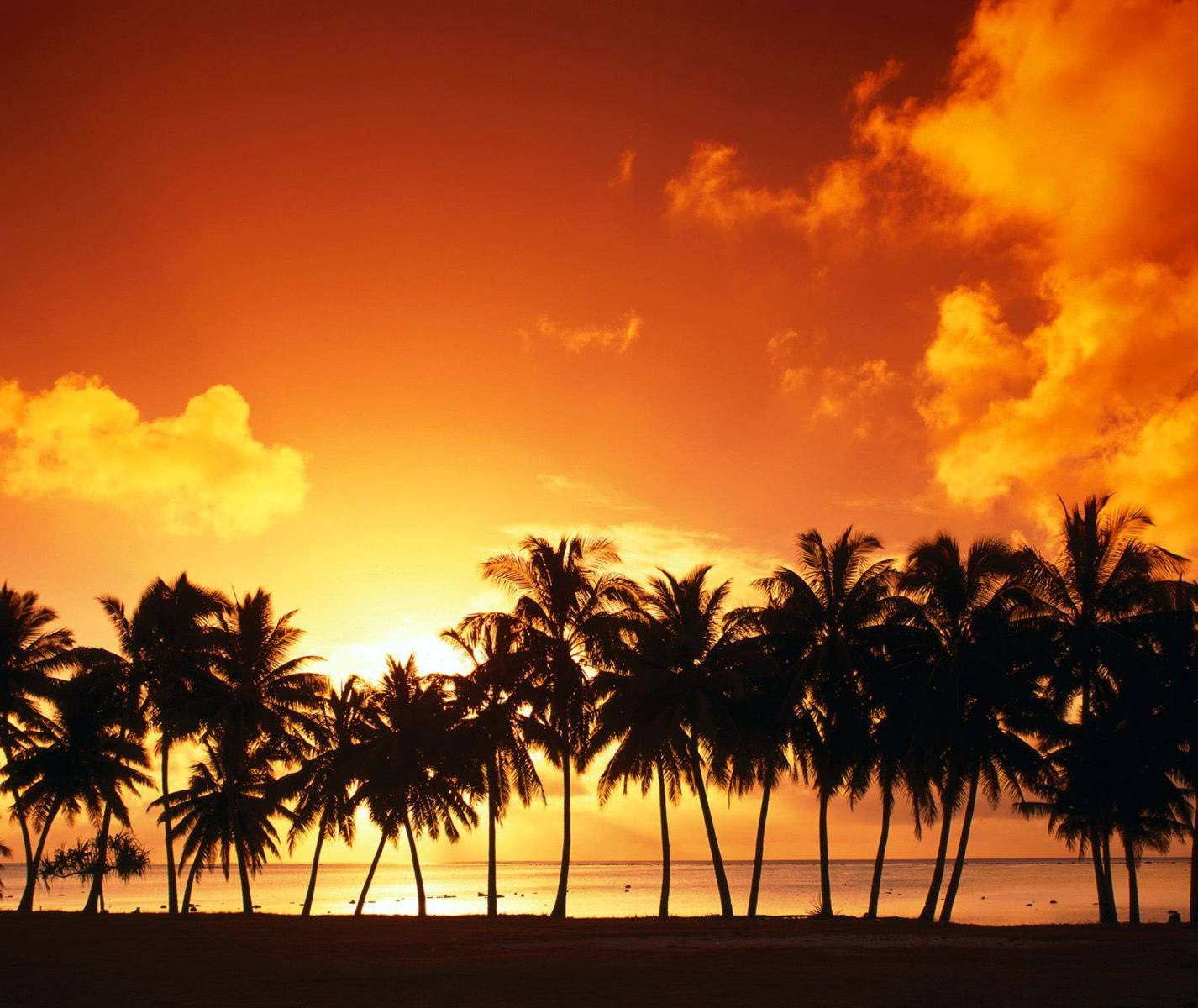 Palmtrees In Sunset
