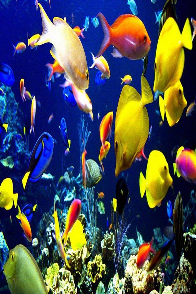 Fishes underwater
