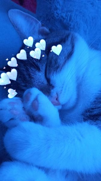Aesthetic blue cat