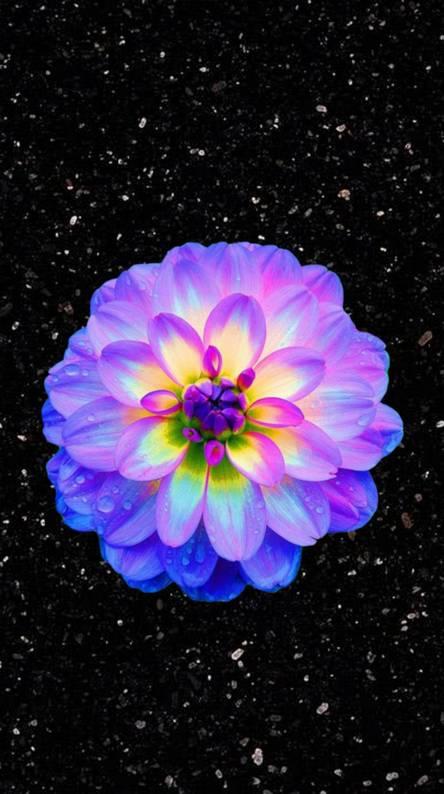 Pretty Bright Flower