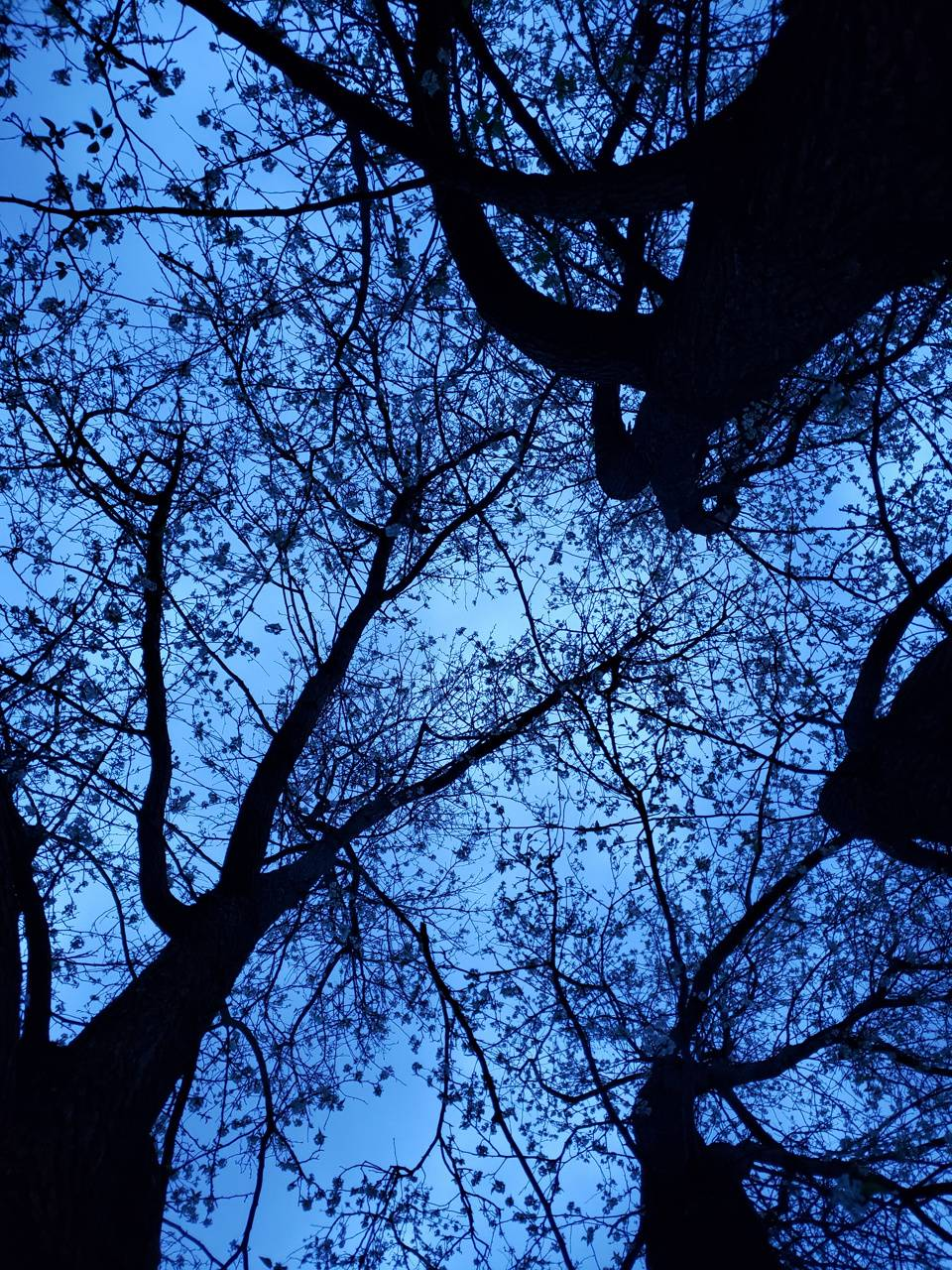Looking Up A Tree
