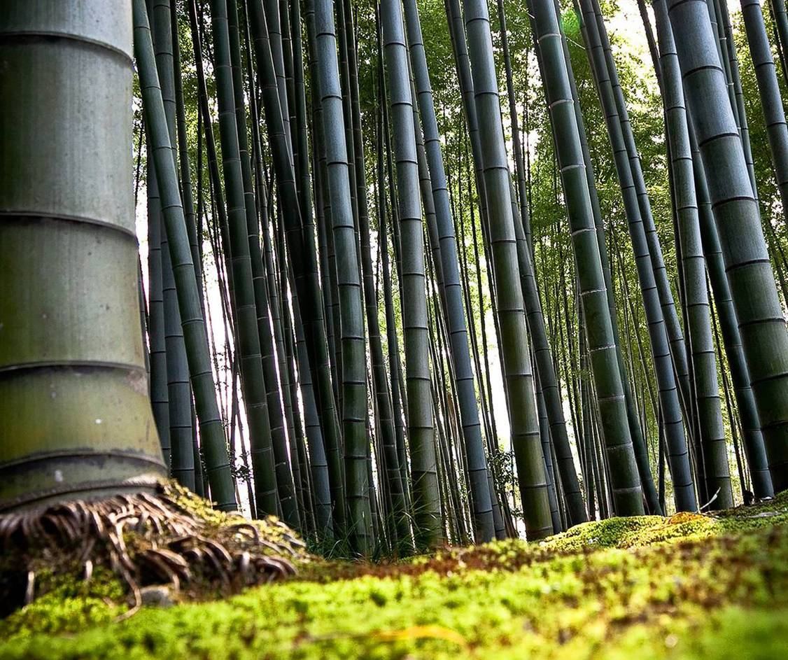 Bamboo Forest Hd