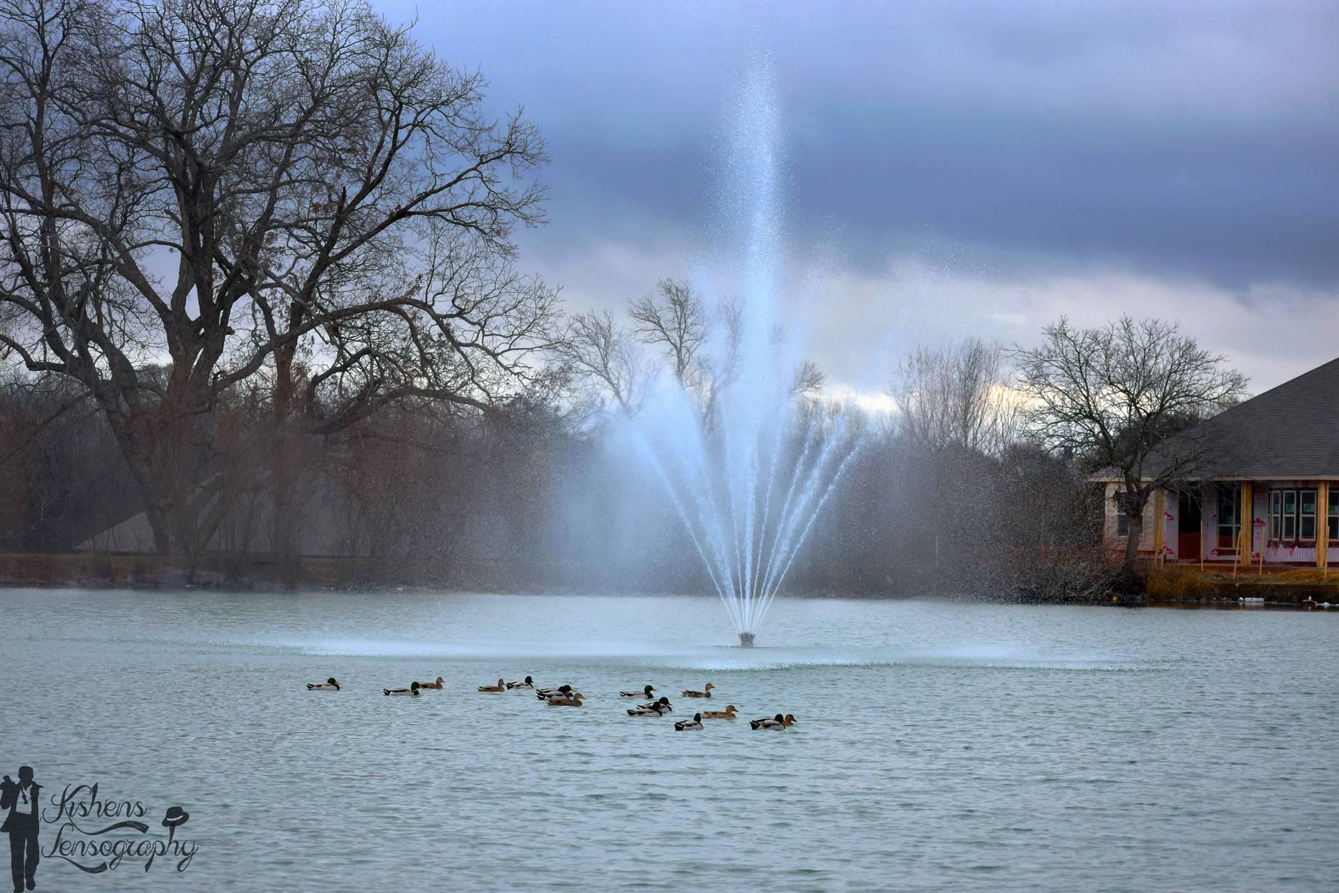 Ducks Shower