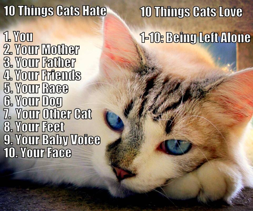 Cat Hate List