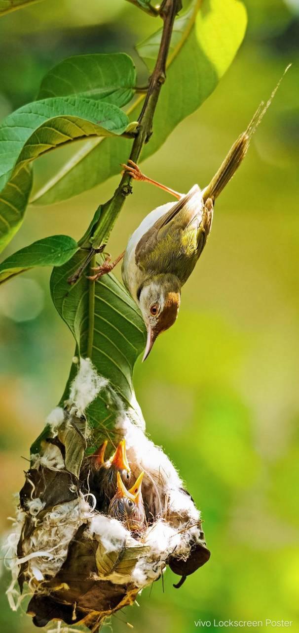 Birds Wallpaper by SM_Qadir - 41 - Free on ZEDGE™