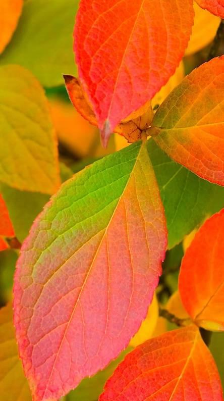 Nature Colore